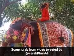 हाथी पर बैठकर योग सिखाते हुए गिर गए Baba Ramdev, तो Farah Khan ने ट्वीट कर कही यह बात