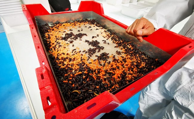World's Biggest Insect Farm To Come Up In France After Firm Raises $224 Million