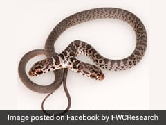 Look What The Cat Dragged In! Family Pet Brings Two-Headed Snake Inside