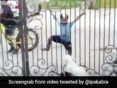बच्चे ने दरवाजे के पीछे किया भांगड़ा, तो कुत्ते के बच्चे भी उछल-उछलकर करने लगे डांस - देखें मज़ेदार Video
