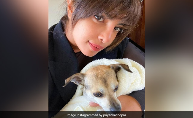 Things Priyanka Chopra Doesn't Miss Any More After Months Of Social Distancing