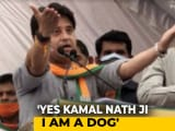 "Video : ""Haan, Main Kutta Hoon"": Jyotiraditya Scindia Says Kamal Nath Called Him ""Dog"""