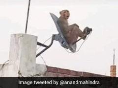DTH डिश पर मज़े से बैठा था बंदर, आनंद महिंद्रा ने दिया मज़ेदार रिएक्शन, लोग हंस-हंसकर हुए लोट-पोट