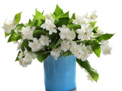 Plants For Home & Office: ये पौधे बदल देंगे आपके घर और वर्क प्लेस का माहौल