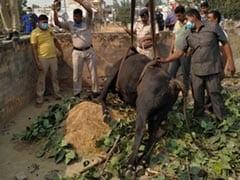 Delhi पुलिस ने10 फुट गहरे गड्ढे में गिरे बैल को निकाला, जनता से मिली तारीफ