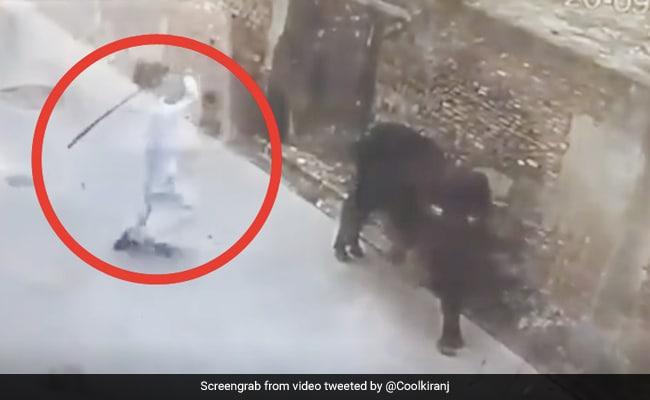 अंकल ने सांड को बेवजह मारा पीछे से डंडा, तो जानवर ने गुस्से में लिया ऐसा बदला - देखें Viral Video