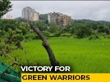 Video : 800 Acres Of Mumbai's Aarey Declared Forest, Metro Carshed To Be Shifted