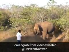 हाथी को छेड़ा तो पलटकर यूं किया Attack, रणदीप हुड्डा ने शेयर किया Viral Video