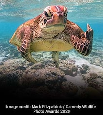 Comedy Wildlife Photography Awards 2020: A Rude Turtle And Other Winners