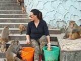 Video : Animal Lover Steps Out To Feed Stray Monkeys