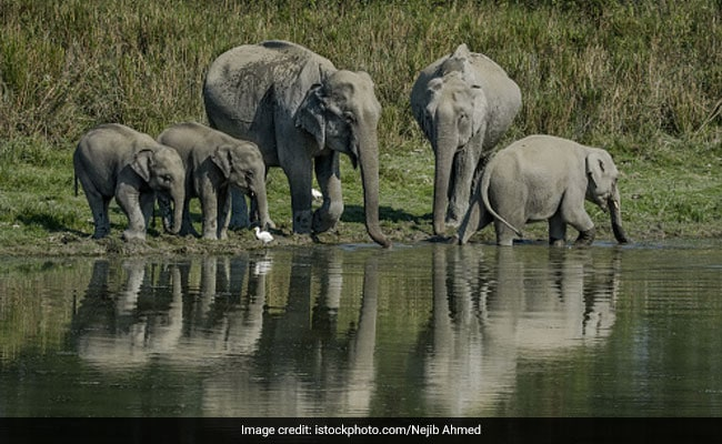 Assam 2nd State In Country To Have 7 National Parks After Madhya Pradesh