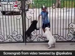 Viral Video: Boy Does Bhangra In Front Of Dogs. Their Reaction Is Hilarious