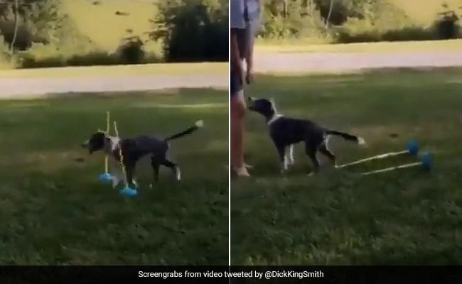 कुत्ते ने पांच सेकंड में दिखाई ऐसी क्यूटनेस, 10 लाख से ज्यादा बार देखा गया Video