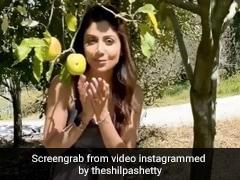 Shilpa Shetty सेब के पेड़ को देख खुशी से लगीं उछलने, Video में बोलीं- यहां आलू के भाव बिक रहे हैं...