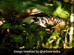 प्रियंका गांधी के बेटे ने शेयर कीं जंगल की Stunning Photos, पेड़ के पीछे छिपकर जासूसी करते दिखा बाघ