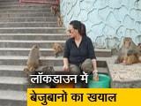 Video : गुवाहाटी : आसमां बेगम 7 महीने लाई बंदरों के लिए खाना