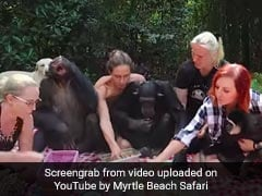 Viral: Foodie Chimpanzee Trio Eating Burgers And More Is Internet's Latest Obsession
