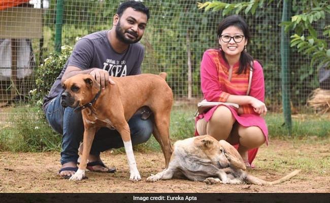 मंदिर में की शादी, फिर दूल्हा-दुल्हन ने दोस्तों को दावत देने की जगह 500 आवारा कुत्तों को खिलाया खाना, खूब हो रही तारीफ