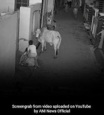 Video: As Bull Attacks Haryana Woman, Her Little Grandson's Stunning Act