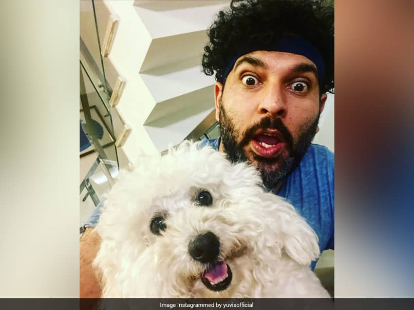 IPL 2020: Yuvraj Singh Pokes Fun At David Warner After SunRisers Hyderabad Captain Launches YouTube Channel