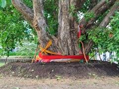 भारत में इन पेड़ और पौधों का है आध्यात्मिक महत्व, इनसे जुड़ी है लोगों की आस्था