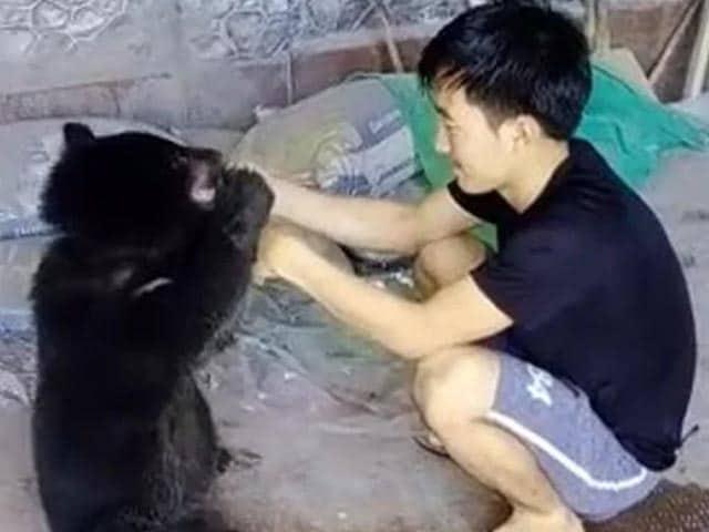Video : Take Care Of Luba: Arunachal Boy's Tearful Goodbye To Rescued Bear Cub