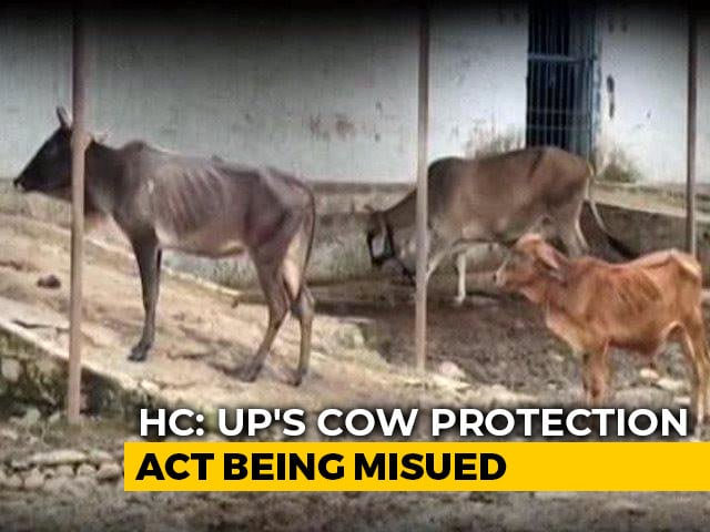 Video : Law Against Cow Slaughter in UP Being Misused, Says Allahabad High Court