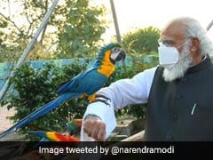 Bird Watching, Cherry Blossoms: PM Modi On Connect With Nature Amid Pandemic