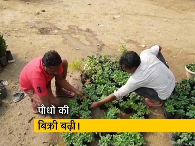 Videos : दिल्ली : खराब होती हवा के चलते बिक रहे हैं पौधे
