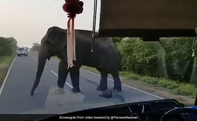 Viral Video: Elephant Steals Bananas From Truck On Highway, Twitterati Are Divided
