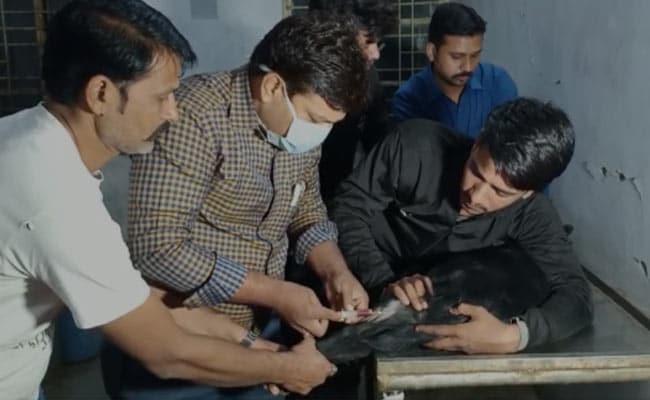 मध्य प्रदेश: 3 साल के कुत्ते का कराया DNA टेस्ट, जानिए किस वजह से पुलिस को लेना पड़ा ये फैसला