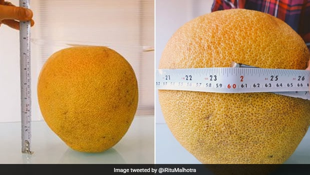 India's Biggest Orange: Can You Imagine Indias Biggest Orange Found In Nagpur Farm Trending Twitter Post