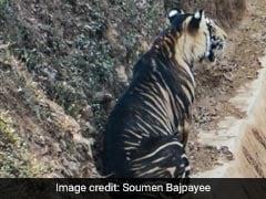 Ultra Rare Black Tiger Photographed In Odisha. See Viral Pics