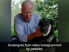 "Biden's Dog Major To Leave White House Again For ""Additional Training"""