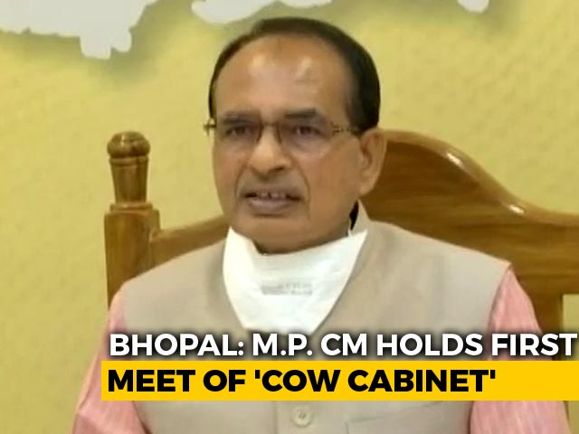 Video : Shivraj Singh Chouhan Chairs First Cow Cabinet Meet In Madhya Pradesh