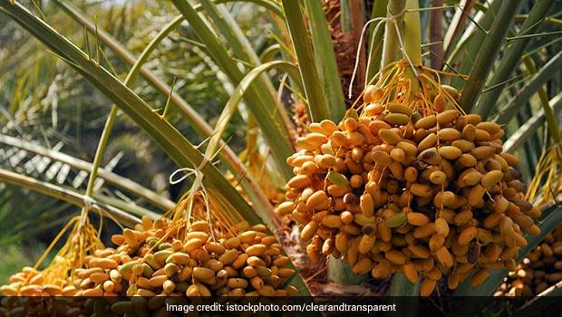 """""""Eating Fallen Fruits Without Washing Dangerous"""": AIIMS Expert On Nipah"""