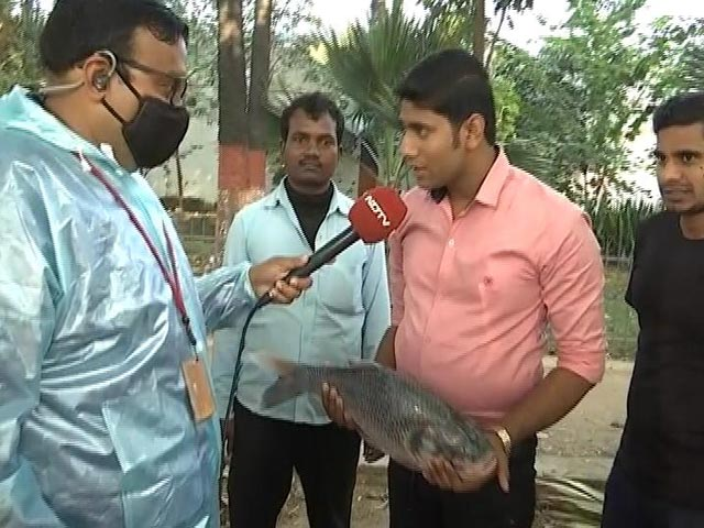 """Video : With Good Omens, Tejashwi Supporters """"Fish"""" For Victory, Change In Fate"""