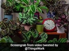 7 Million Views For This Viral Video. Elon Musk, Ivanka Trump 'Like' It