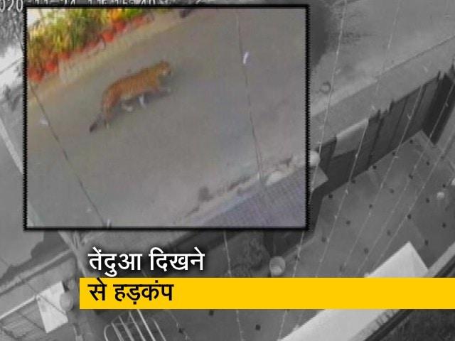 Videos : गाजियाबाद के रिहायशी इलाके में दिखा तेंदुआ