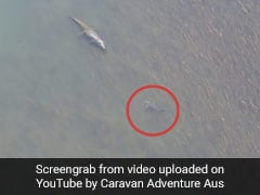 Watch What Happened When A Bull Shark Came Face To Face With A Crocodile