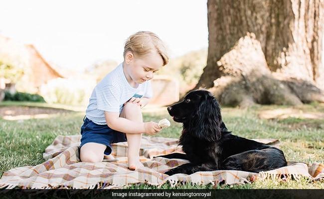 प्रिंस विलियम और केट अपने परिवार के कुत्ते 'लुपो' को अलविदा कहें