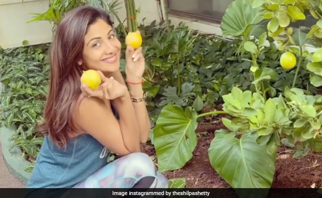 When Life Gives You Lemons, Do What Shilpa Shetty Does