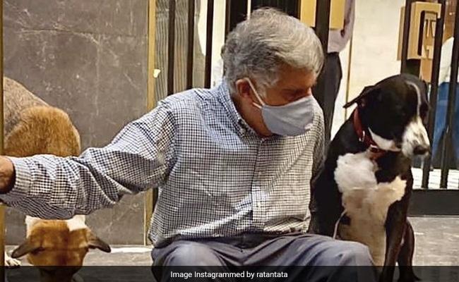 Ratan Tata Reveals How His Office Dog 'Goa' Got The Unusual Name