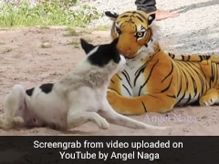 YouTuber Pranks Animals With Fake Tiger. Videos Are Viral With Millions Of Views