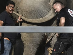 """""""World's Loneliest Elephant"""" Lands In Cambodia From Pak, Greeted By American Superstar"""