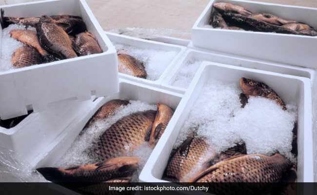 Microplastics In Seafood From Goa Estuary 'Worrisome': Study