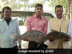 Bihar Results: रुझानों में मिली RJD को बढ़त, तो तेजस्वी के घर सामने मछली लेकर खडे हुए लोग - देखें Photos