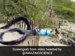 50 फीट का विशालकाय सांप बड़े ड्रम में फंसा, आंखें खुली की खुली रह गईं- देखें Video