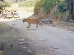 Watch: Tigress Crosses Road With Her Four Cubs In Corbett National Park