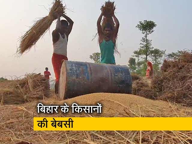 Video : बिहार में किसानों को नहीं मिल रहा धान का सही दाम, आधी कीमत में बेचने को मजबूर